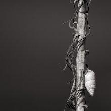Portrait of a stalk / .....