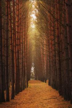 Autumn Rhythms / ***