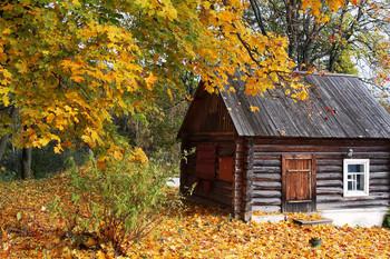 gold autumn / ***