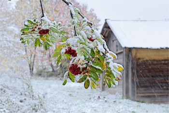 Winter is coming soon / ***