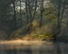 Morning in the Swamp ... / ***
