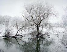 Winter arganza / ***