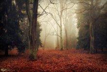 Autumn / ......