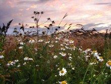 Field aramat .... / ***
