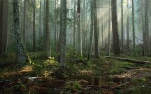 Morning in the primeval forest / ***