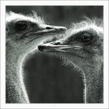 PORTRAIT OF COUPLE /