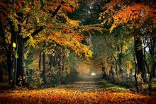 Autumn colors (repost) / ***