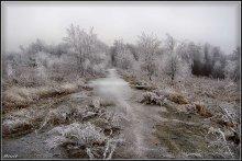 Frosty / *******
