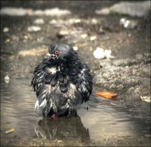 Spring bathing / ***