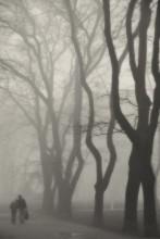 Foggy day. / ***