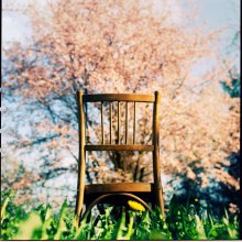 Chair and buzzing Tree! / ______