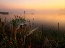 pautinnovy dawn / ***