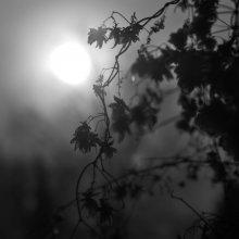 Light / ***