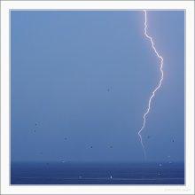 Thunderstorm and Gulls / ***