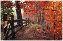 Bound for the fall ... / ***