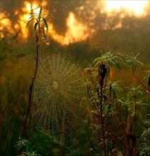 a veil of mist / ***