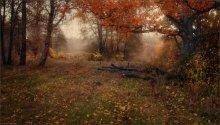 Autumn mood / ***