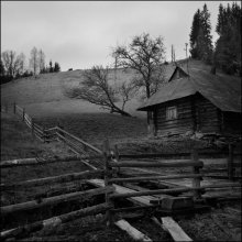 Spring in the Carpathians / ***