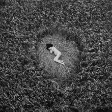 a quiet place / ***