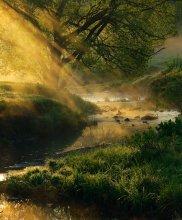 gold spray / ******