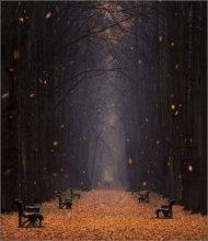 Leaf fall / ***