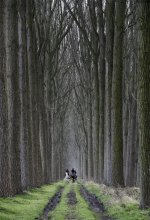 The Forest / Horse riders in the forest of Moerkerke near the Belgian coast.