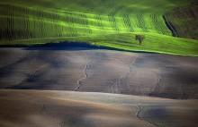 Spring Fields / Tuscany / Italy