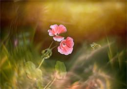 Waves flowering / ***