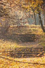 autumn in city park / ***