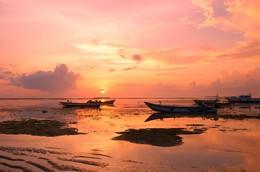 Pink morning / ***