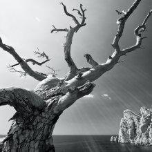 Landscape Crimean Druid / ***