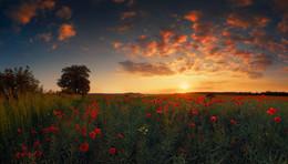 Poppy sunset / ***