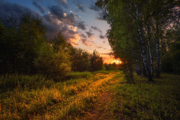 Sunset in the forest / ***