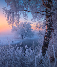 Winter Morning / ***