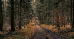 late autumn ... / ***