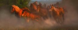 Herd / ***
