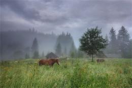 Horses / ***