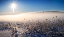 winter grass / ***