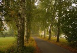 autumn morning / ***