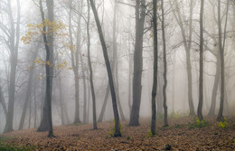 Autumn forest / ***
