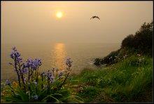 Sunny Bay / ***