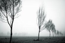 Time when the fog is always / ***