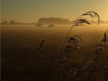 Morning in a meadow ... / ***