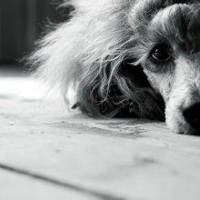 ... Sometimes it is sad ... / .....