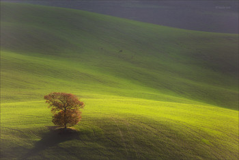 Lonely tree / ***