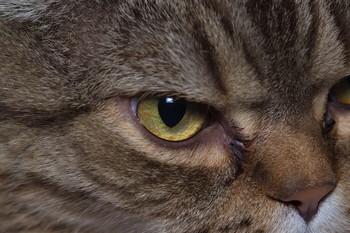 Tomcat / ***