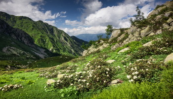 In the mountains of the Caucasus / ***