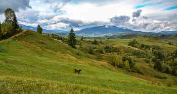 Landscape with horse / ***