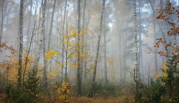 in the autumn forest / ***