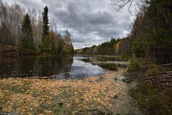 Gloomy autumn / ***